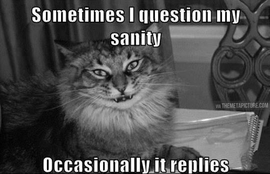 funny-cat-sanity-crazy-question